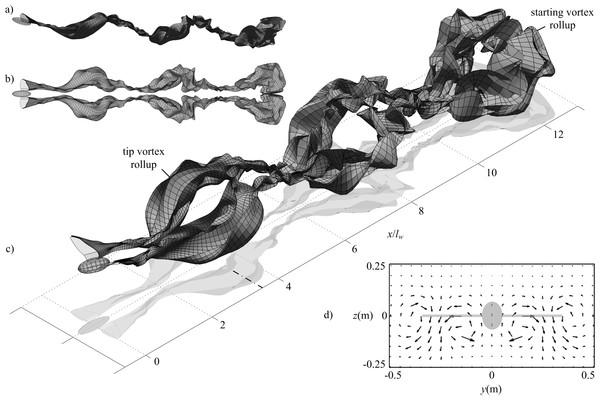 Wake geometry for simulated minimum power cruising flight of the Rock Pigeon over three wingbeats.