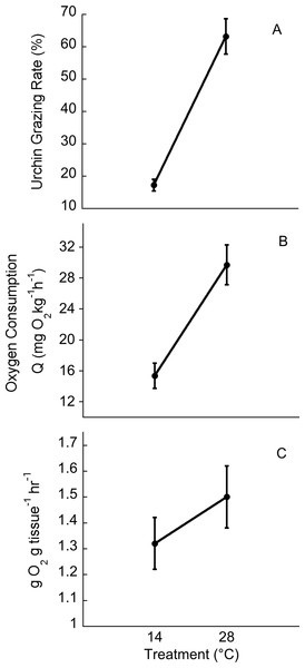 Temperature effects on urchin grazing rates, metabolism and algal photosynthesis.