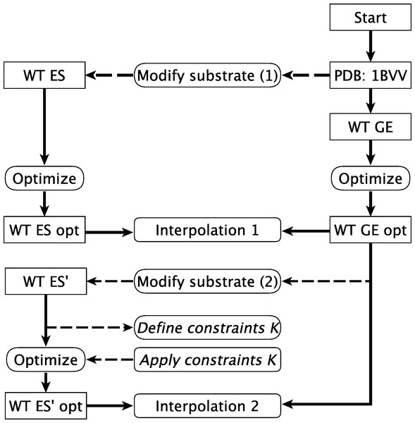 Calculation pathway for WT interpolations.