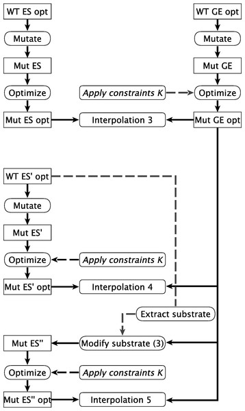 Calculation pathways for mutant interpolations.