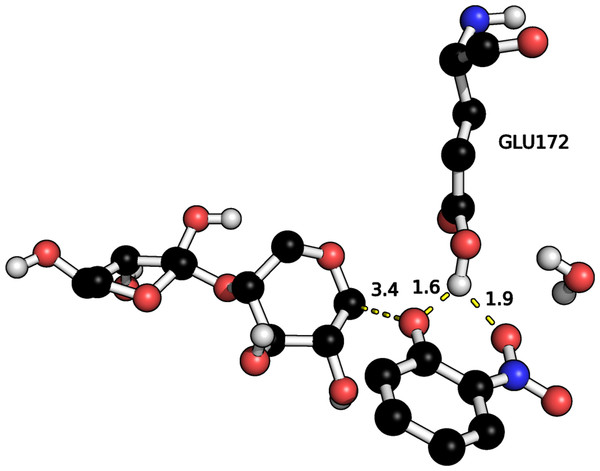 Hydrogen bonds between ONP leaving group and E172 proton in the optimized GE.