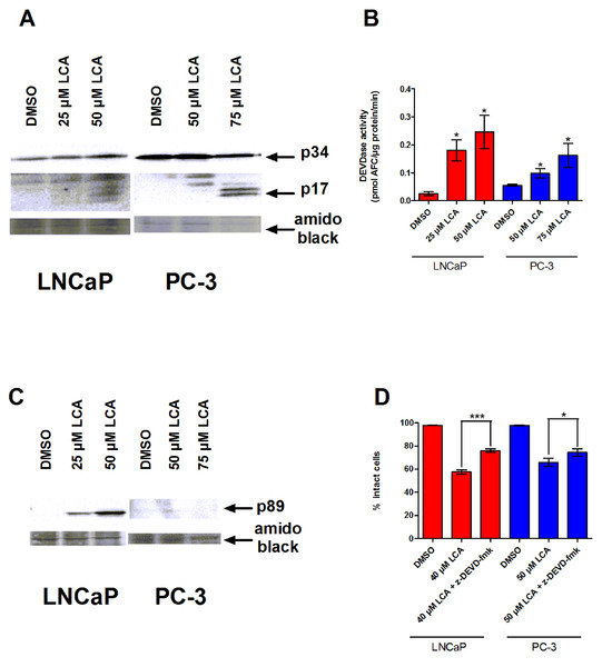 LCA-induced cell death is a caspase-3-dependent process.