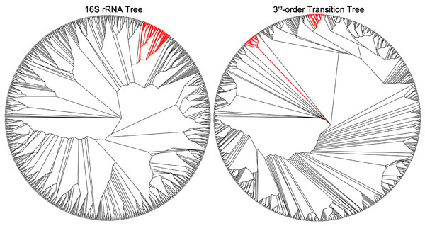Genus Streptococcus appear in two distinct clusters in the third-order transition tree, but are assigned one cluster in the 16SrRNA tree.