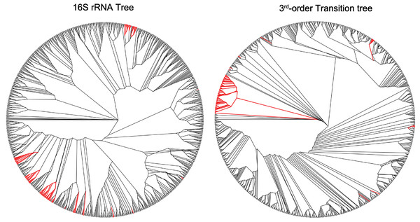 A group of mostly aquatic bacteria that cluster together in the third-order transition tree, but are dispersed in the 16S rRNA tree.