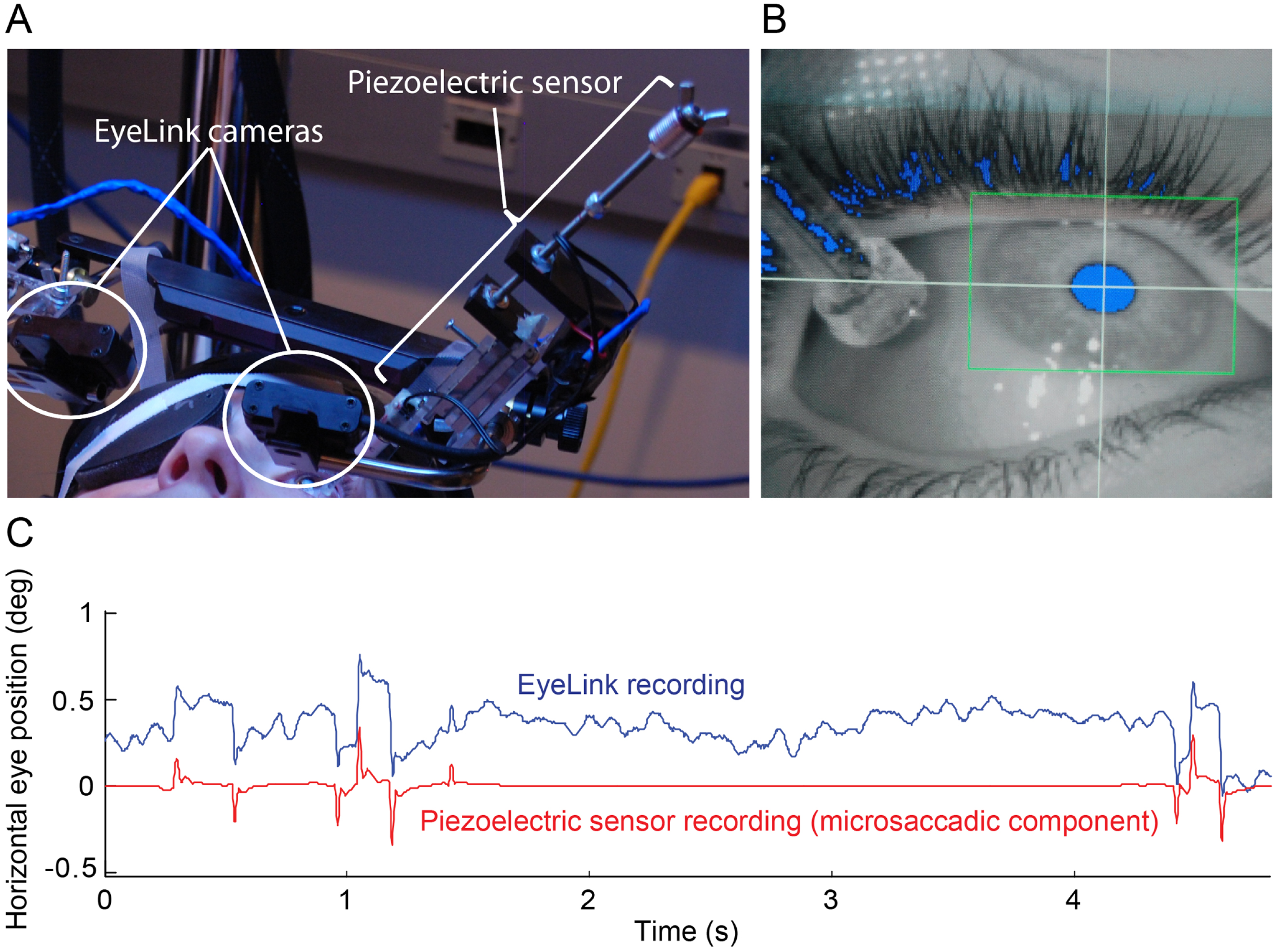 simultaneous recordings of ocular microtremor and microsaccades with a piezoelectric sensor and