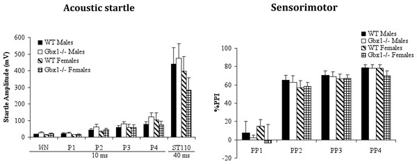 Startle reactivity and pre-pulse inhibition in wild-type (WT) and Gbx1−/− mice.
