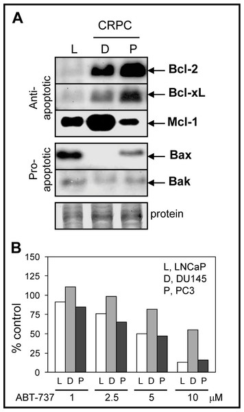 Bcl-2 family protein levels and sensitivity to ABT-737 in PCa cells.