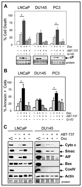 ABT-737 enhances Doc-mediated apoptotic cell death in LNCaP and PC3 but not in DU145 PCa cells.