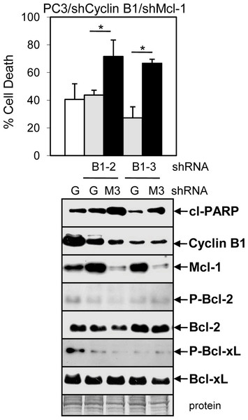 ABT-737 enhancement of Doc-mediated apoptosis is more dependent on the ability of cyclin B1/Cdk1 to decrease Mcl-1 than to phosphorylate Bcl-2/Bcl-xL.