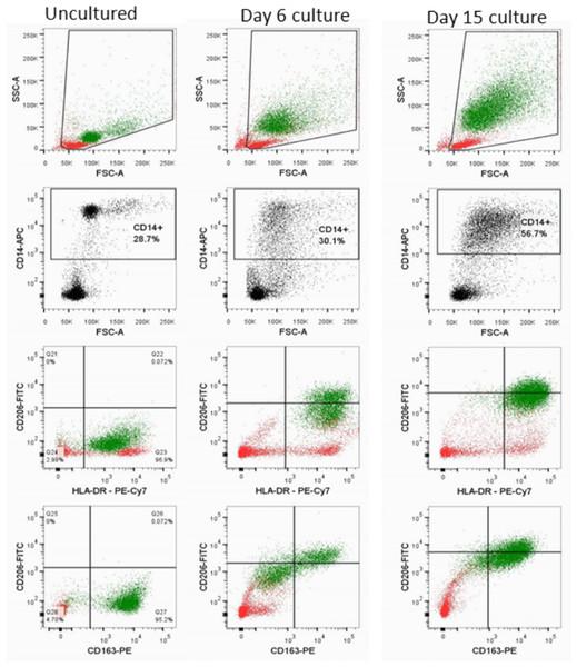 SDHB C136U RNA editing increases during monocyte-macrophage maturation.