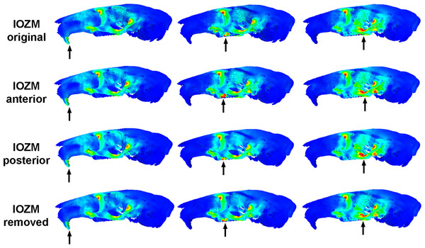 Predicted distribution of von Mises stresses across the skull of Laonastes aenigmamus.
