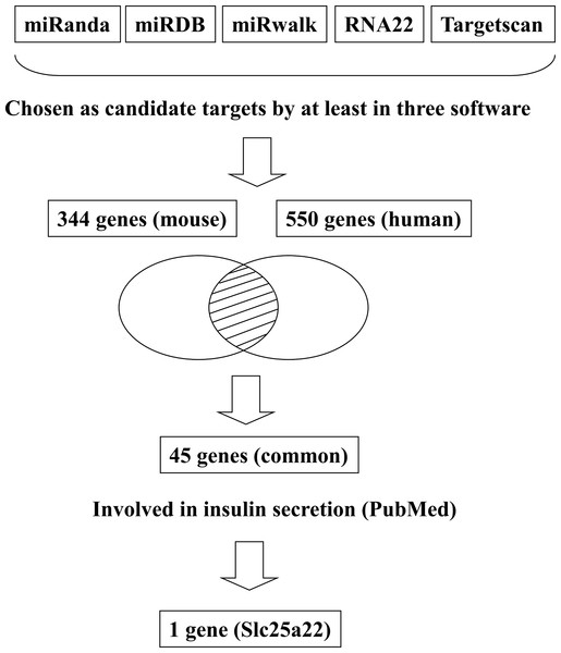 Flowchart for the selection of candidate targets of miR-184.