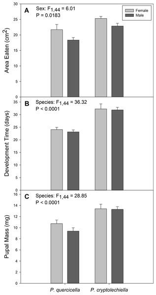 Development metrics of Psilocorsis cryptolechiella and P. quercicella caterpillars.