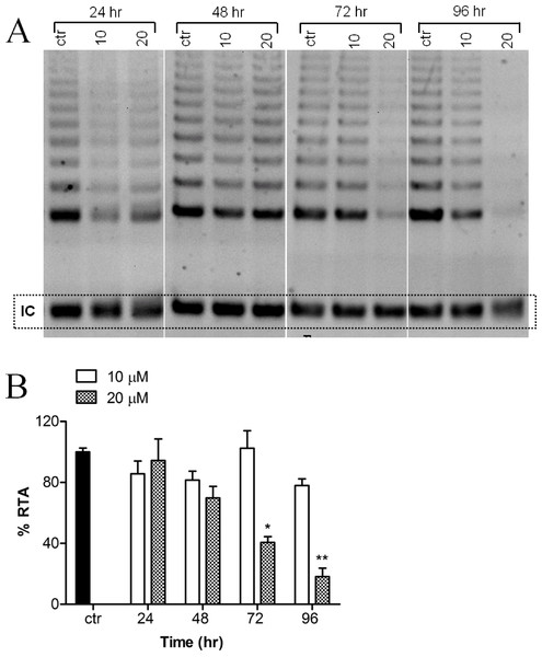 Effect of harmine on telomerase activity in MCF-7 cells.