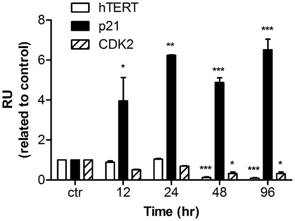 mRNA levels of hTERT, p21, and CDK2 in response to harmine treatment.