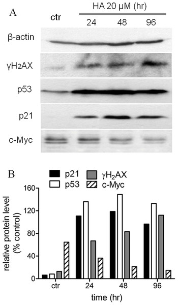 Harmine induces a general DNA damage response byover-expressing p53/p21 and γH2AX.