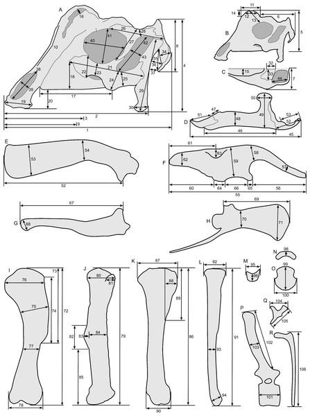 Standards for skeletal measurements.