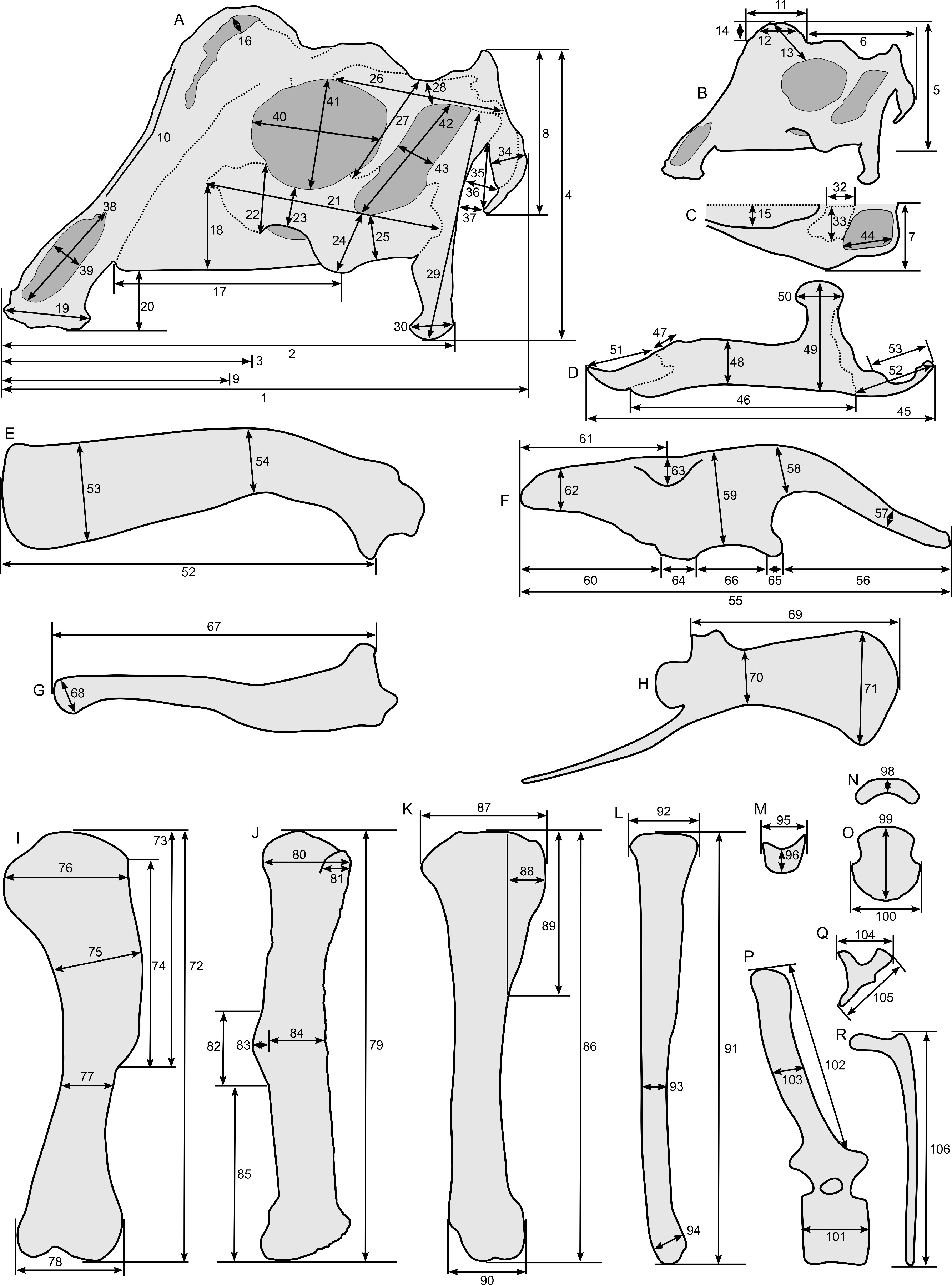 Ontogeny In The Tube Crested Dinosaur Parasaurolophus Hadrosauridae Reassembled Number 5 Is Alive Again Cru Jones Society Doi 107717 Peerj182 Fig