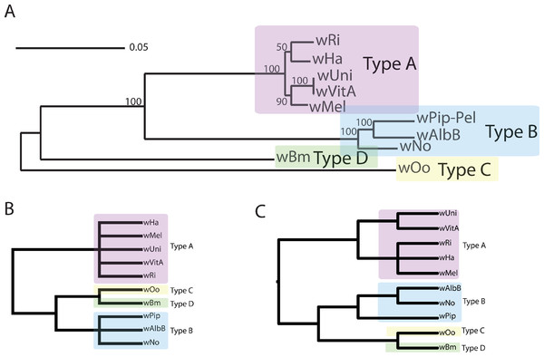 Wolbachia supergroup trees produced by concatenation of a dataset of 508 orthologs or by PhyBin's binning and clustering algorithm.
