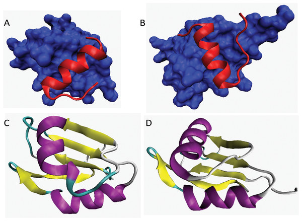 3D-structures of fragments and domains of two highly disordered spliceosomal proteins, Snu66 (plots A and B) and Npl13 (plots C and D).