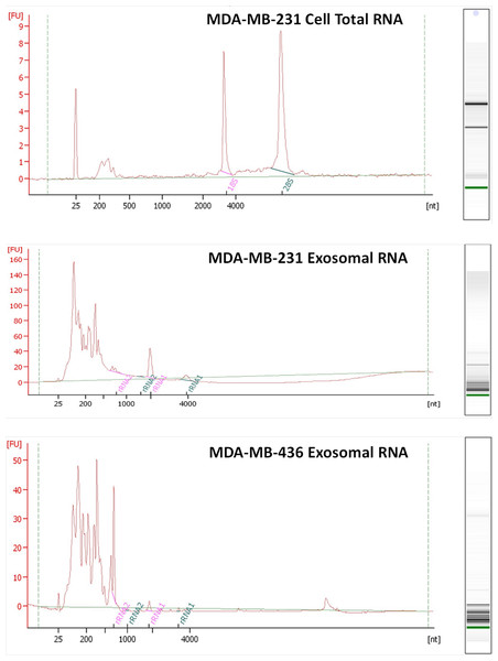 Analysis of RNA from cells and exosomes by Bioanalyzer.