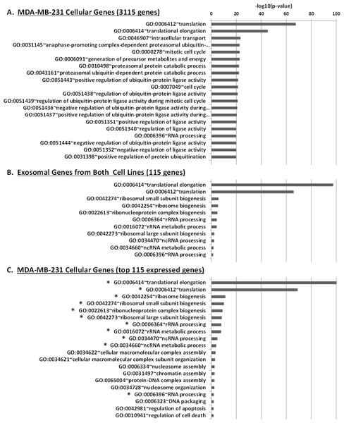 Gene Ontology (GO) enrichment analysis of genes detected in cellular and exosomal RNA from breast cancer cell lines.