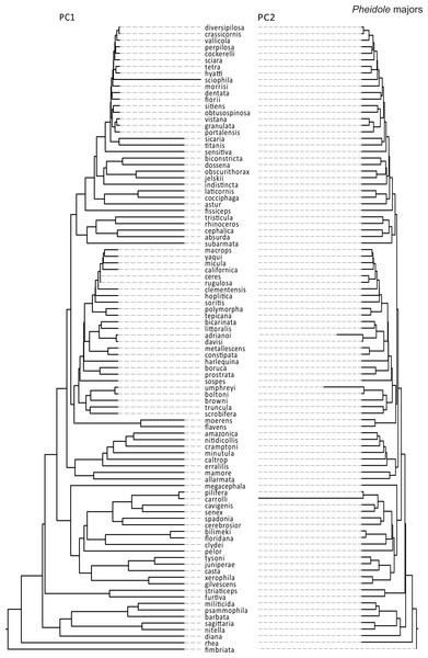 Rates of size and shape evolution in Pheidole majors.
