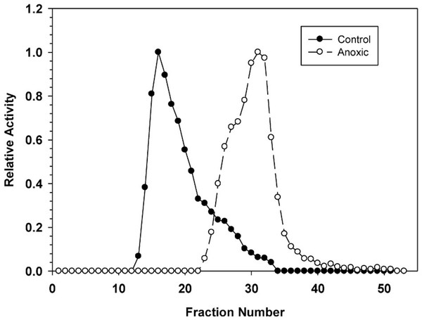 DEAE-Sephadex elution profiles for L. littorea hepatopancreas G6PDH activity from control and 24 h anoxic snails.
