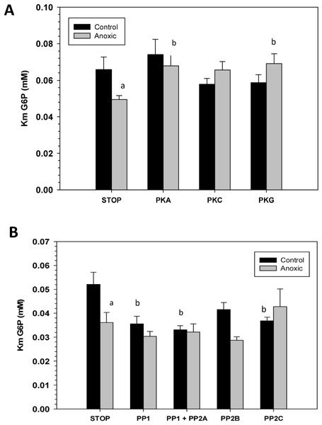 Effects of in vitro incubations to stimulate the activities of (A) protein kinases or (B) protein phosphatases on the Km G6P of G6PDH from L. littorea hepatopancreas.