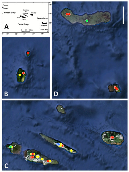 Azorean Platanthera populations sampled for morphometric analyses during the present study.