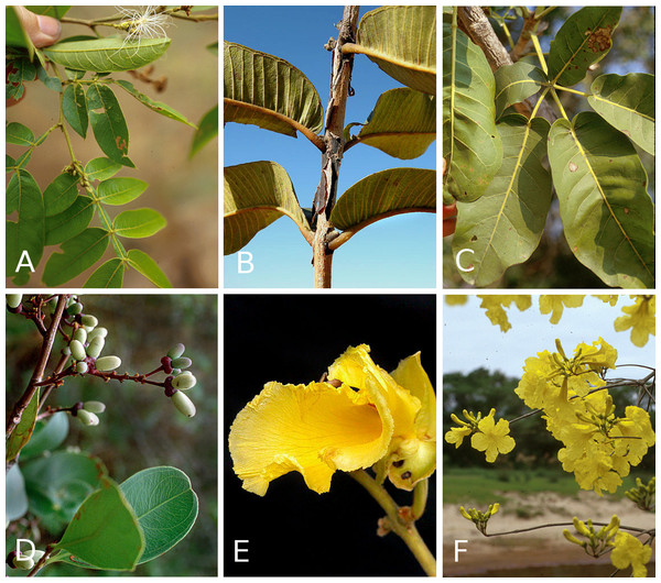 Woody plant species with extra-floral nectaries from the cerrados of Brazil.