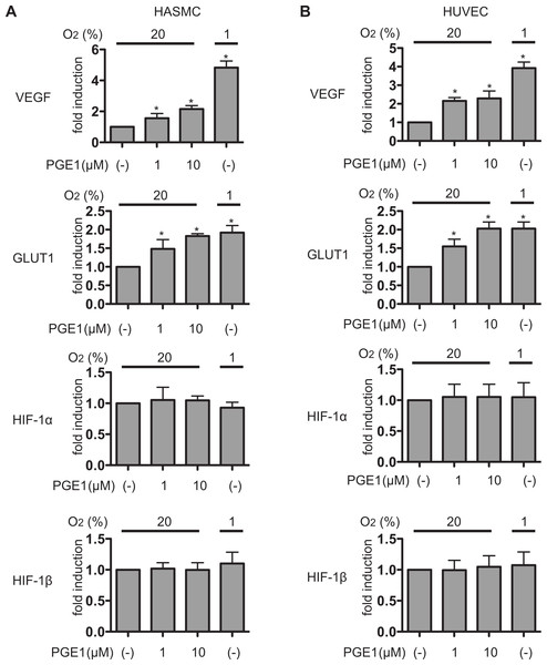 PGE1 induces HIF-1 activation and expression of its downstream genes.