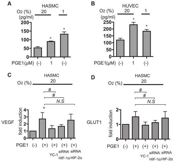 PGE1 induces VEGF secreation in an HIF-1α-dependent manner.