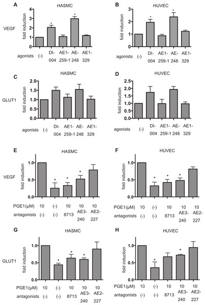 Differential involvement of EP receptors in PGE1-induced HIF-1 activation.