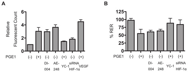 PGE1 increases permeability of vascular barrier reconstituted with HUVECs.