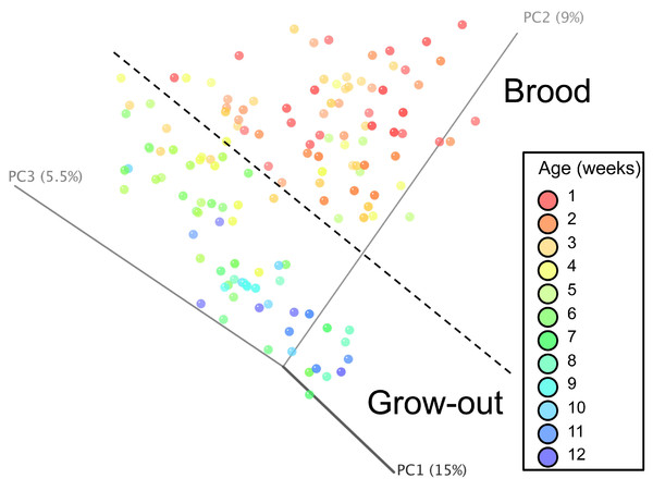 Principal coordinate analysis (PCoA) of samples of differing group and timepoint.