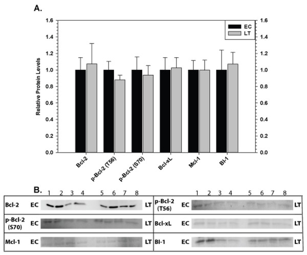 Levels of mitochondria-associated pro-survival proteins in skeletal muscle of euthermic (EC) and torpid (LT) ground squirrels.
