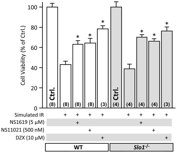 SLO1 independent protection of adult mouse cardiomyocytes against simulated ischemia-reperfusion (IR) injury.