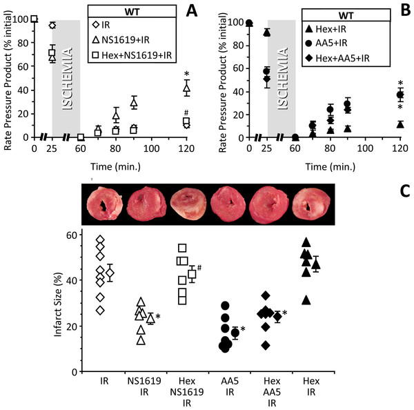 Blocking cardiac neuronal function blocks SLO1 dependent protection in the intact heart.