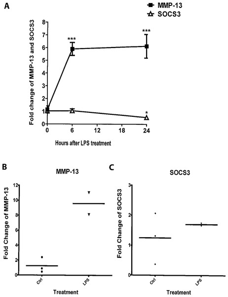 LPS induces expression of MMP-13 and SOCS3 in MC3T3-E1 cells and primary calvarial osteoblasts.