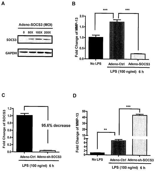 Critical role of SOCS3 in regulating LPS-induced MMP-13 gene expression in MC3T3-E1 cells.