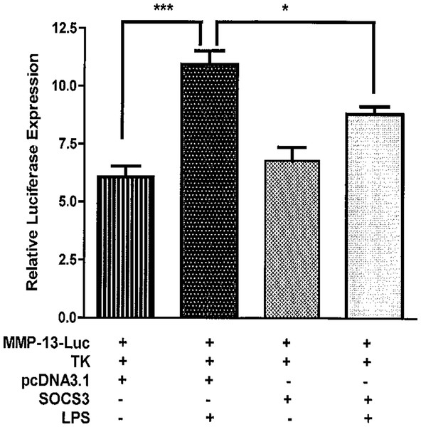 SOCS3 inhibits the activities of MMP-13 promoter-luciferase induced by LPS.