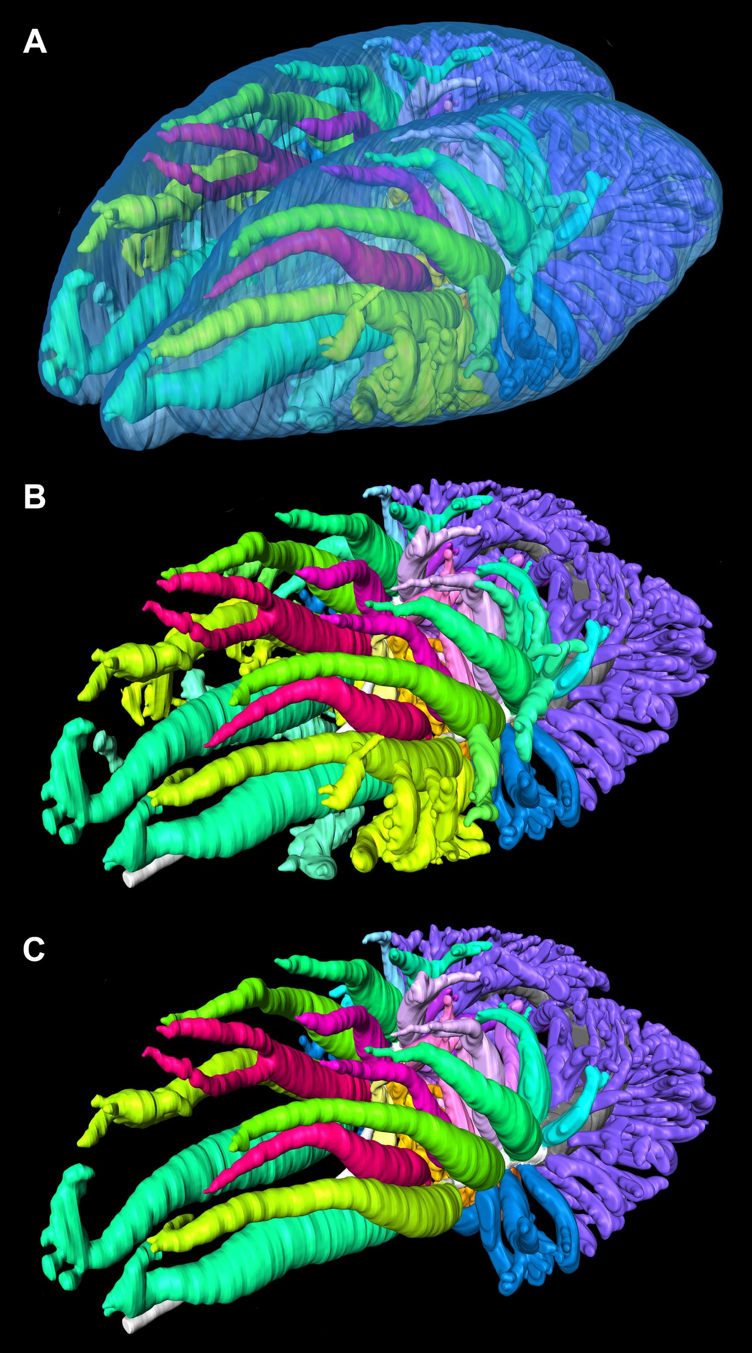 Pulmonary Anatomy In The Nile Crocodile And The Evolution Of