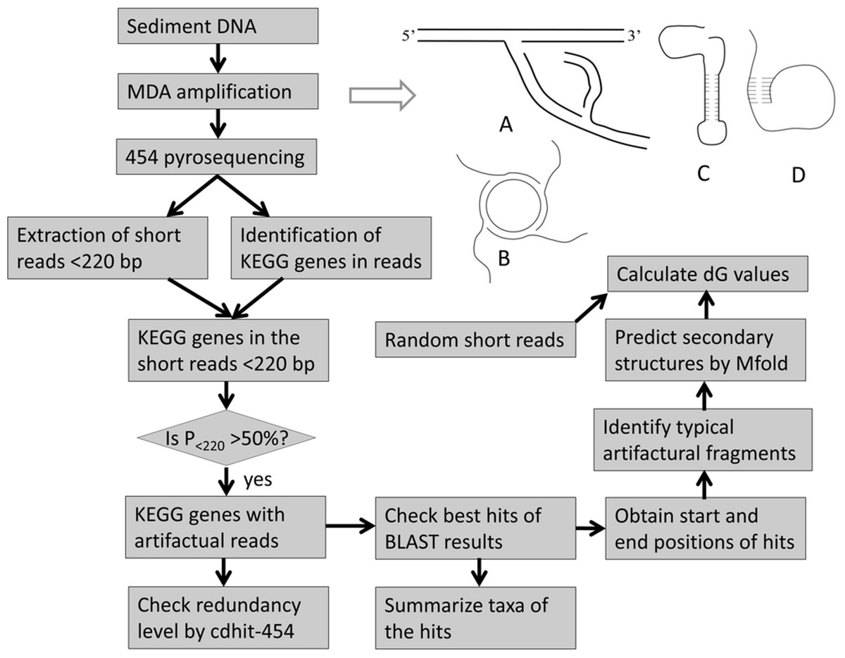 Protein Synthesis Flow Chart Worksheet Answers Images ...