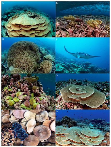 Reef habitats at Kingman Reef.
