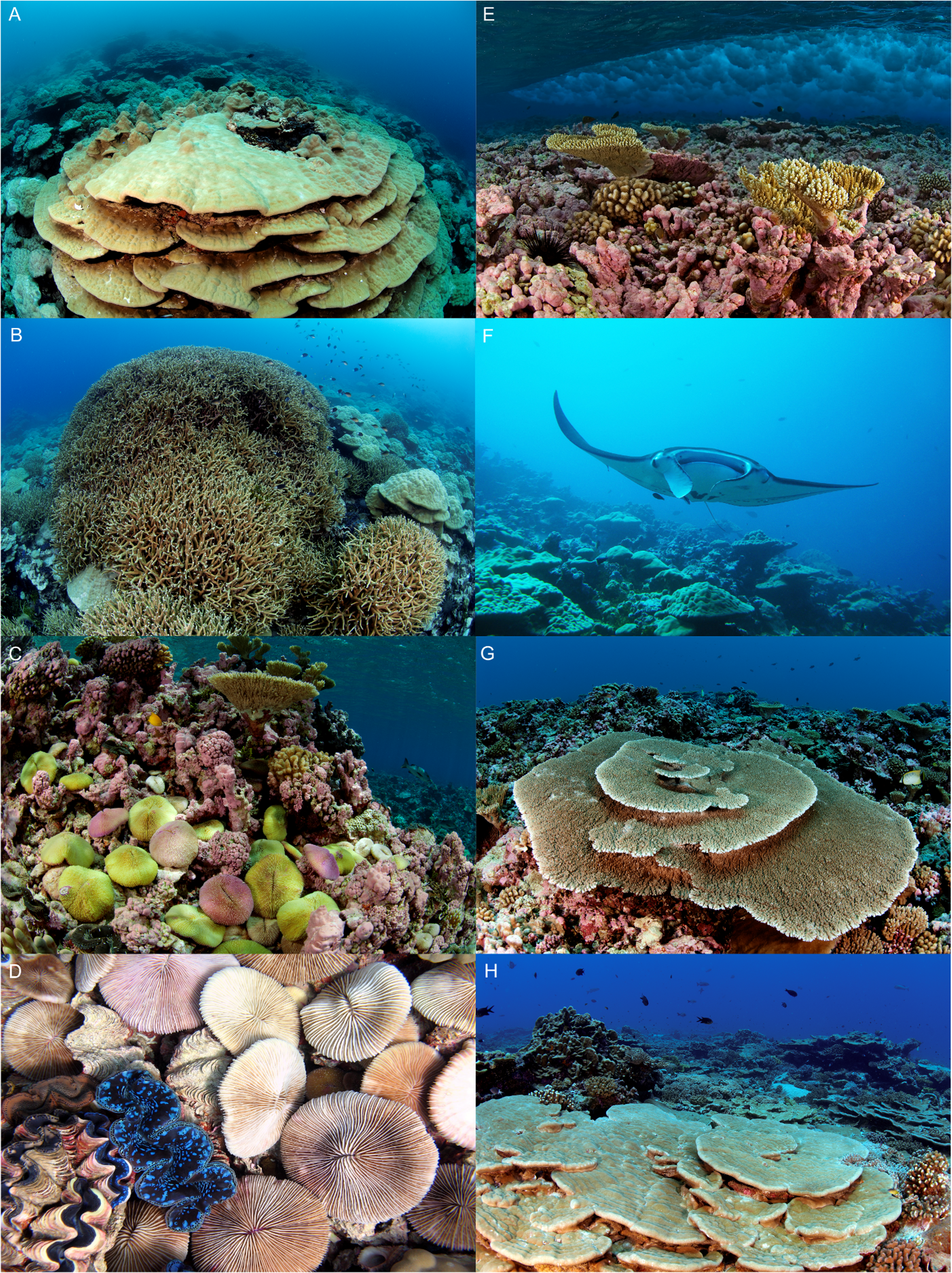benthic communities at two remote pacific coral reefs effects of