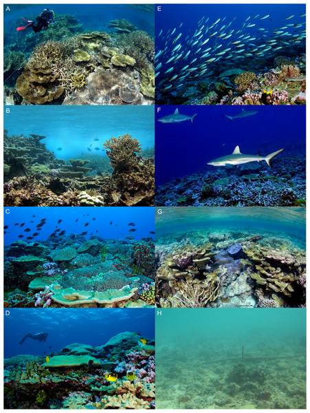 Reef habitats at Palmyra Atoll.