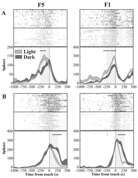 Activity of F5 and F1 motor neurons in light and dark conditions.