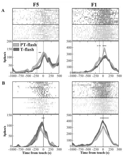Activity of F5 and F1 motor neurons in PT- and T-flash conditions.