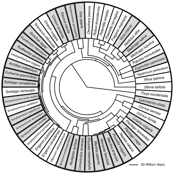 Phylogenetic tree with branch lengths representing all species in this study.